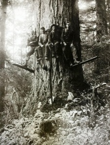 Four loggers sit in the completed undercut, with two supporting themselves on springboards.